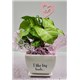 5_in_I_Like_Big_Buds_Planter_with_LOVE_Pick_-_19.99