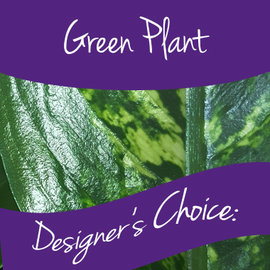 green-plant-designers-choice-perfect-gift