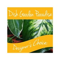 dishgarden_paradise_designers_choice
