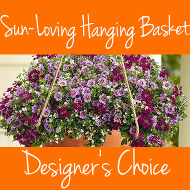 Sun_Hanging_Basket_choice