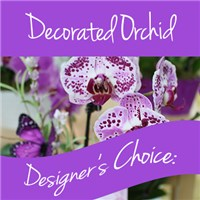 Decorated-Orchid-Designer-s-choice