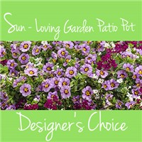 Garden_Patio_Pot_choice