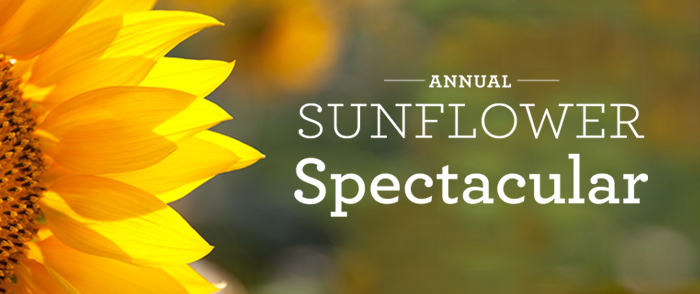 SUNFLOWER_SPECTACULAR_WEBBANNER_700x294